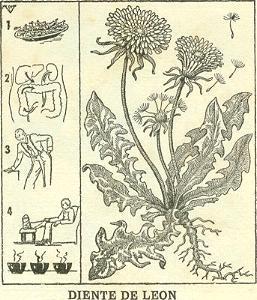 Remedios Naturales En El Mundo Rural
